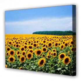 Tablou Canvas Camp Floarea Soarelui, Dreptunghiular, Diverse Marimi