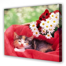 Tablou Canvas Pui de Pisica, Dreptunghiular, Diverse Marimi