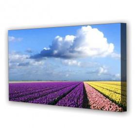 Tablou Canvas Lan de Flori, Panoramic, Diverse Marimi