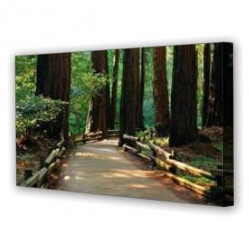Tablou Canvas Poteca in Padure, Panoramic, Diverse Marimi