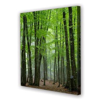 Tablou Canvas Padure Verde, Patrat, Diverse Marimi