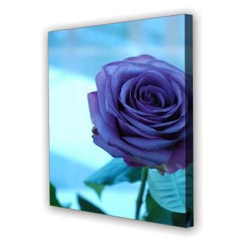 Tablou Canvas Trandafir Roz, Patrat, Diverse Marimi