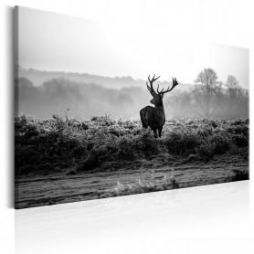Tablou - Deer in the Wild 120x80 cm