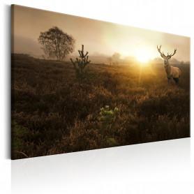 Tablou - Foggy Field 90x60 cm