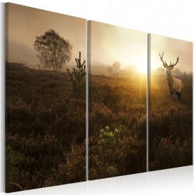 Tablou - Foggy Field I 90x60 cm