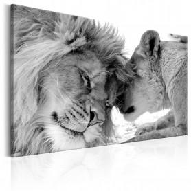 Tablou - Lion's Love 120x80 cm