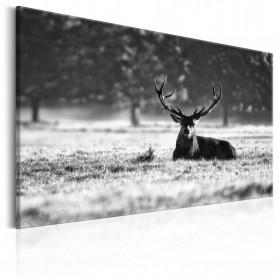 Tablou - Lying Deer 90x60 cm