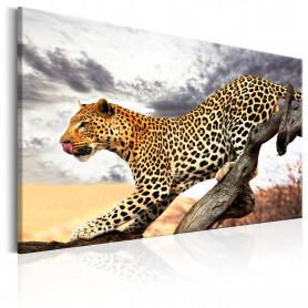Tablou - Predatory Stare 90x60 cm