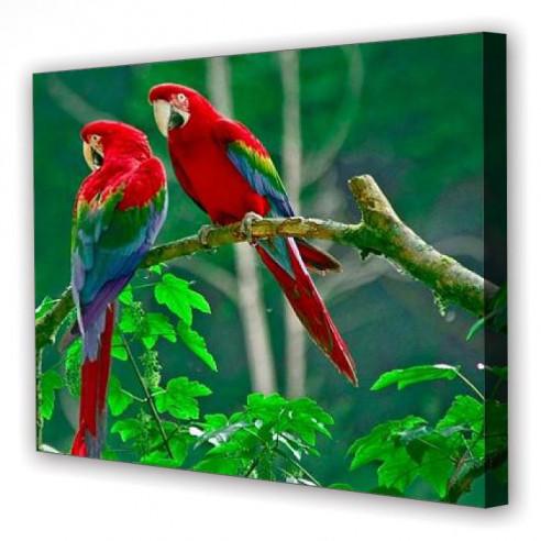 Tablou Canvas Papagali Tropicali, Dreptunghiular, Diverse Marimi