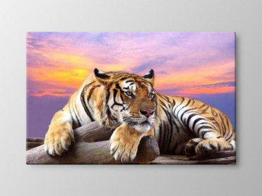 Tablou Canvas Top Tiger