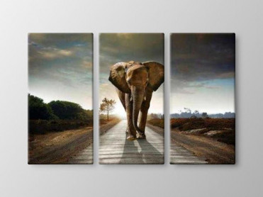 Tablou Canvas 3 Piese Elefant